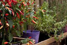 Hortas / Pomar / Tudo para hortas residenciais ou para ter um pequeno pomar.