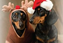 Dachshund Gifts for Dog Lovers / Dachshund gifts dachshund lovers want. Because nothing makes life complete than a dachshund.
