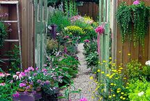 Gardening / Find beautiful gardens and gardening tips and tricks. So many flowers...so little time! / by Just Plum Crazy