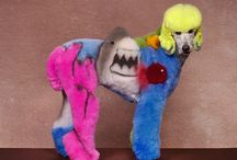 Crazy dog grooming / by Emma Preedy