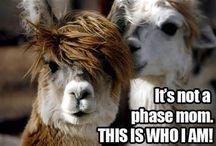 Llamas P~P