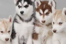 MY Favorite Dogs I Want Ever #2..