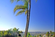 Views around the Hollywood Hills & Sunset Strip