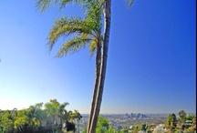 Views around the Hollywood Hills & Sunset Strip