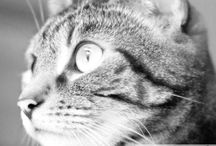 Purrs Full of Love / Cats, Photography, Animal Rights & Rescue  #UK #catblog