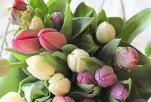 Des tulipes / by Otilia C