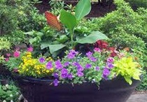 Gardening Examiner Pieces