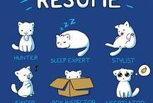 Cat lover stuff
