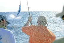 Sport Fishing / Unforgettable sport fishing experience at Los Sueños Resort and Marina