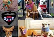 doggie accessories