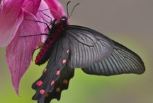 Beautiful insects / by chandni pandey