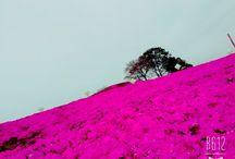 東京ドイツ村 / 東京ドイツ村の芝桜とイルミネーション
