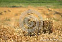 Tarım/İşçi