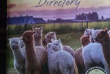 Press / The Alpaca Group is in the news! Learn more about us through unique media features!