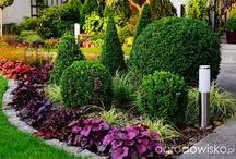 Ogrody rośliny
