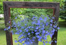 Fleurs En Pots avec cadre