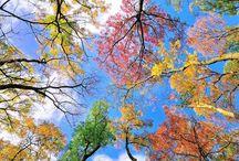 Фотография - Природа
