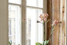 窓周辺 / 窓枠、カーテン、その他置物小物類