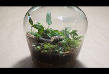 terrarium мини мир