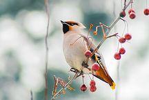 bird / birds и птички