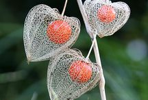 Seed Pods, Flower Heads and Leaf Structures