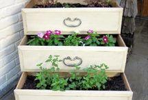 schubladen bepflanzen