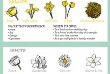 Flowers meaning