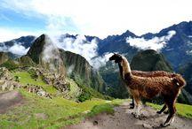 Lama ❤ / You love animals !