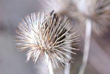 Aqua fleur hiver