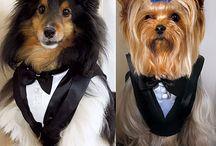 Pet Wedding Accessories / Wedding accessories for your favorite pet