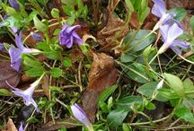 Zielnik PL / Zapis obserwacji roślin z własnych wypraw w teren