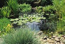 PONDS AND WATER GARDENS