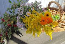 flowers / Flowers pics from my garden in Perniö Finland