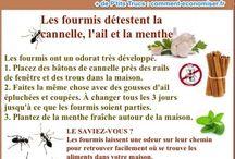 Anti-Fourmis / Nos meilleures astuces et remèdes naturels pour lutter contre les fourmis.
