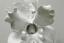 Amazing Flowers / Amazing things done with flora