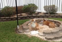 Outdoor dog spaces