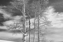 Winter/Hiver