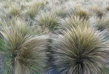 Favourite Grasses