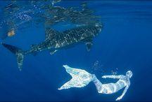 I like to be under the sea / Inspiring underwater stuff