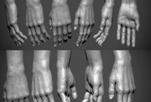 Anatomy - Extremities