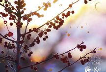 Fonds d'écran Noël bohême / Plongez dans Noël avec ces fonds d'écran bohêmes ! Lorsque le froid saisit la nature endormie, que le silence de l'hiver assourdit le bruit de nos pas, chacun garde en soi un éclat de liberté, de joie et se réjouit du partage de la fête : une part de Bohême.
