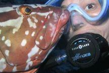 Carey's Reef / Underwater Photography