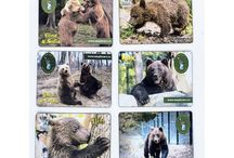 "Online shop / Here you can find souvenirs, T-shirt, teddy bears and books from the ""Libearty"" Bear Sanctuary"