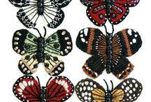 Butterflies / by Aim Doodoo
