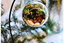 Terrarium / Terrarium - a small garden in a glass ball