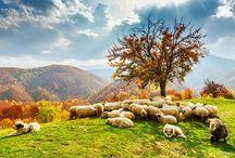 imágenes de Rumania