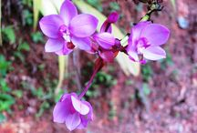 Flowers Цветы / Прекрасные цветы нашей планеты