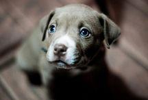 Doggone Dogs 2 / by Stacy G. F.