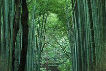 Random Japanese Garden