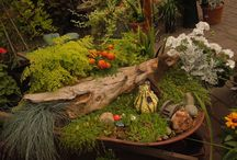 Themed Gardens / Great ideas and themes for your gardens